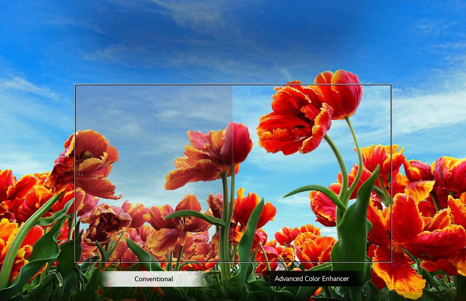 TV-FHD-32-LM63-02-Dynamic-Color-Desktop_v1